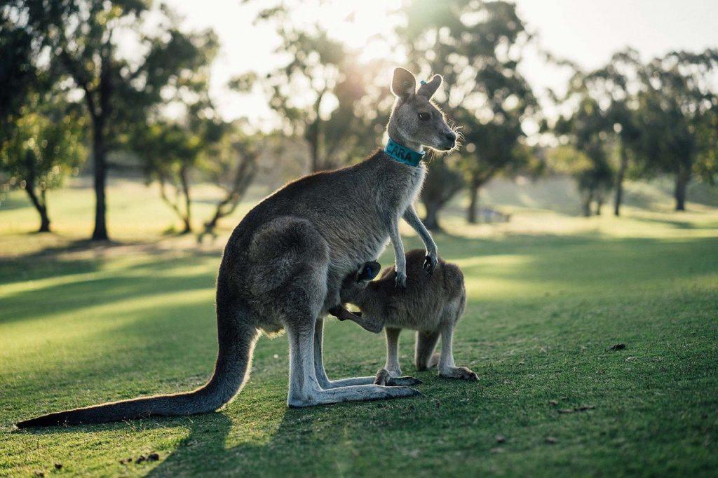 australia-1180394_1280